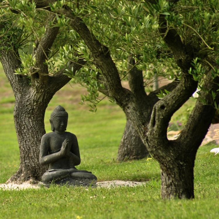 zen sous les oliviers